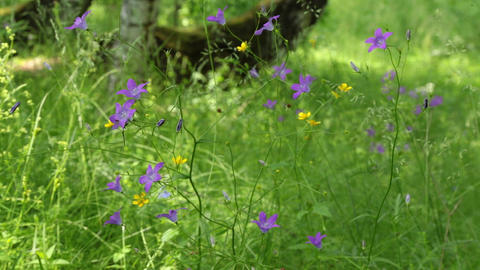 meadow with beautiful wild flowers in the summertime Footage