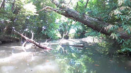 Pond and protruding tree Footage