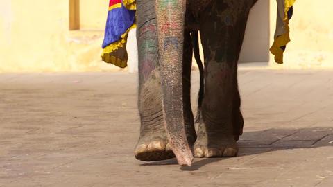 Elephants in Amber fort Jaipur, Rajasthan, India. Legs of elephant Footage