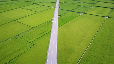 Fly over Mr. Brown Avenue surrounded by rice fields. Chishang. Taiwan Filmmaterial