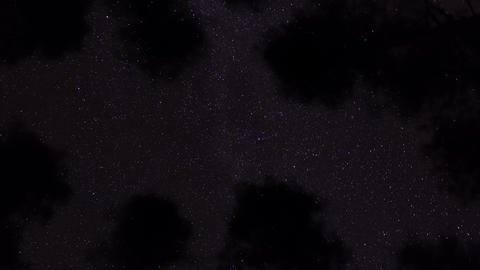 Starry sky behind pine tree canopies time-lapse Footage