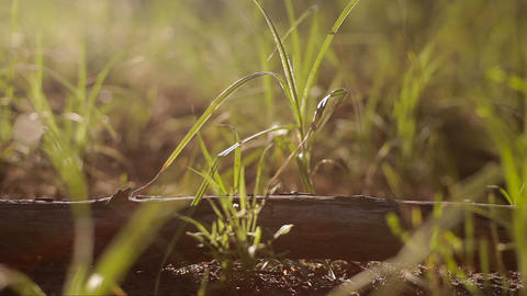 Wooden Stick Lays In Grass With Sunset On Background stock footage