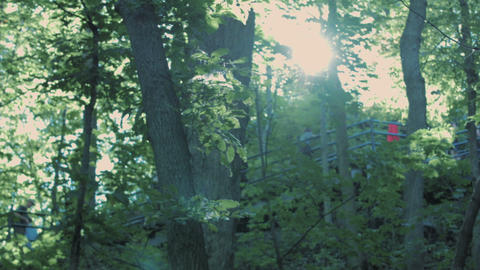 Lens Flare through branches revealing mountain stairs Footage