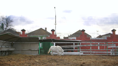White pony in a zoo Footage