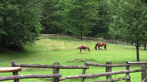 Brown horse standing on a fenced pasture and graze freely 1 Footage