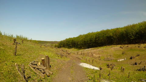 Fresh cutting of trees, stumps under the blue sky near the forest, dirt road Footage