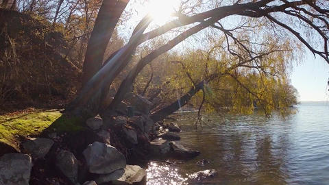 The sun shines on the shore of the reservoir with rocks and trees Footage