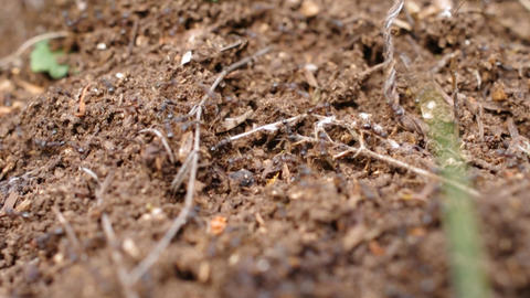 ants in an anthill hurry Footage