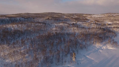 Drone flight over a northern forest in wintertime ビデオ