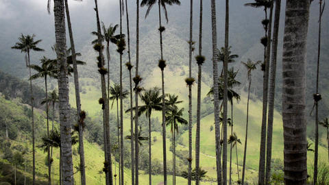 Cocora Valley View Footage