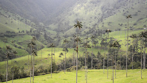 Beautiful Cocora Valley View Footage