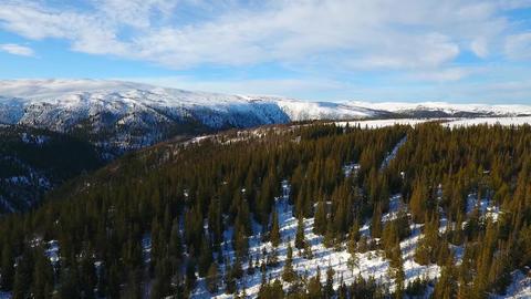 Drone flight over a norwegian coniferous forest in winter ビデオ