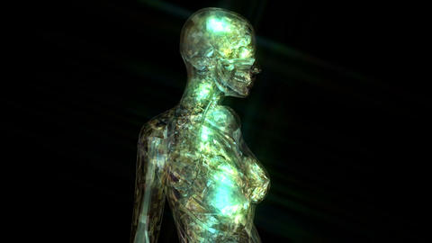 Digital 3D Animation of the human Anatomy Animation