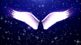 Angel wings (3) Animation