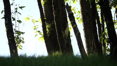 Motion of beautiful blur sun shine through the blowing on wind tree green leaves Footage