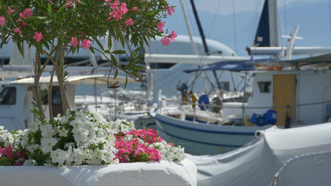 Flowers Near Yachts Footage