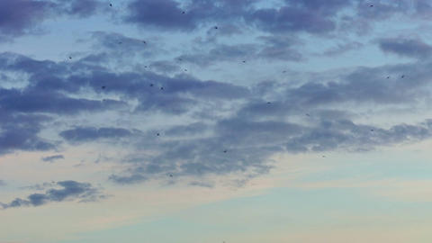 1080p Dark Silhouettes of Birds Soar in Evening Sky Against Background Footage