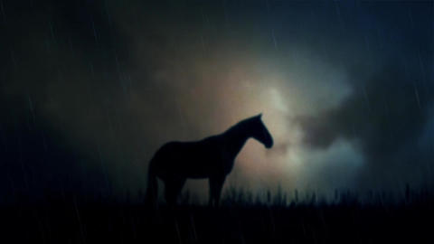 An Epic Stallion Horse Standing on a Field Under a Lightning Storm Live Action