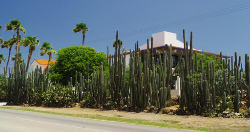 Residential House near Eagle Beach surrounded by Cactus Footage