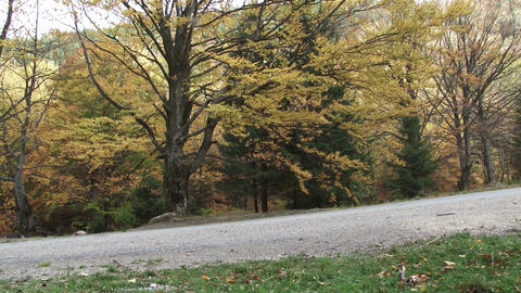 On a mountain road rush a black car. On the road are trees whose leaves are colo Footage