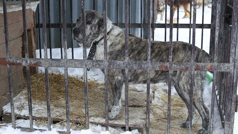 Animal shelter, dogs waiting for their new owners Footage