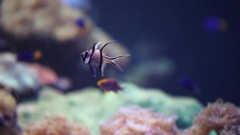 Coral fish Footage