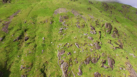 Aerial footage of sheep grazing on mountain slope Footage