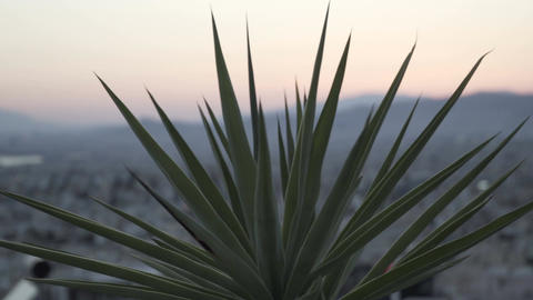 city blur behind plant - focus defocus bokeh ビデオ