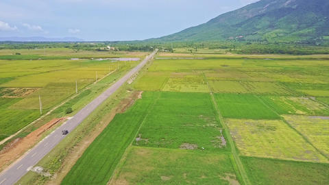 Drone Follows Car Driving along Road among Rice Fields Footage