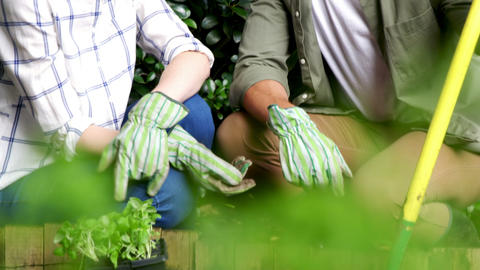 Couple interacting while gardening in garden Live Action