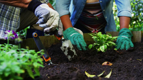 Senior couple planting plants Footage