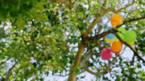 Balloons in a tree Live Action