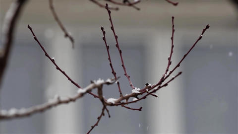 Snowflakes fall in the garden over bare branches of a tree behind window 01 Footage