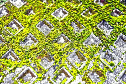 moss's texture フォト