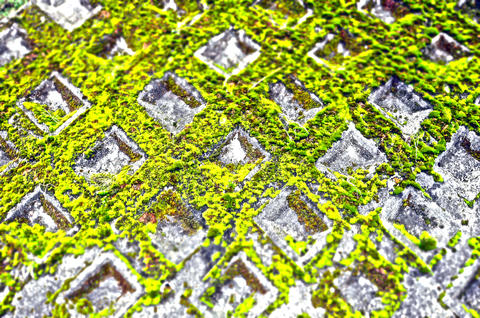 moss's texture Photo