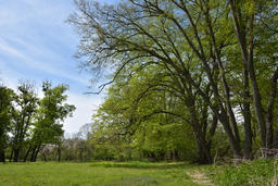 Panorama of a green vibrant park Foto