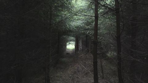 Camera move through dark forest ビデオ