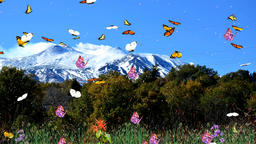 Butterfly in the mountains CG動画素材
