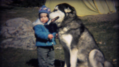 1971: Happy dog smiles while toddler boy adjusts leash Footage