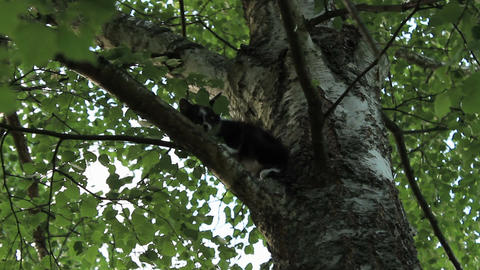 Scared kitten on a tree branch Footage