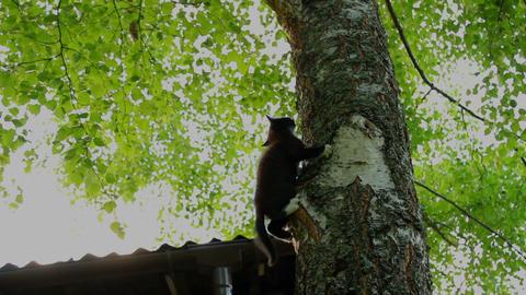 Little kitten is climbing on the tree Footage