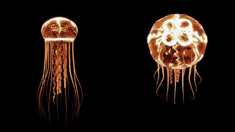 [alt video] Jellyfish Swimming 4k Loop Assets Isolated on Black...