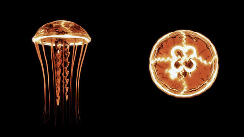 Jellyfish Swimming 4k Loop Assets Isolated on Black Background Animación