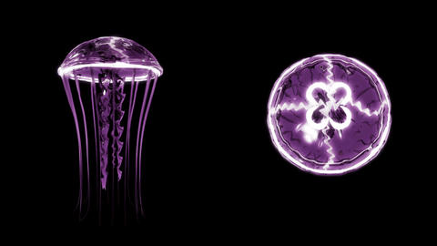 Jellyfish Swimming 4k Loop Assets Isolated on Black Background Animation