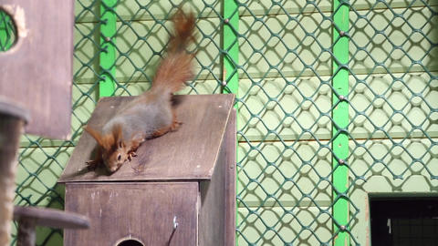 A squirrel climbs the cage Live Action