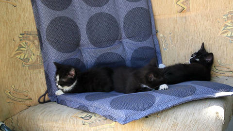 Three kittens have a nap on a sofa Footage