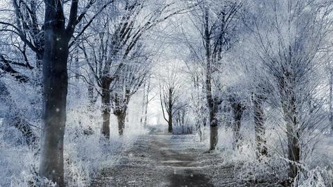 Winter Scenery 애니메이션