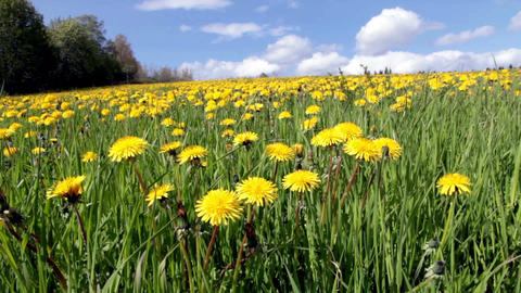 Summertime Meadow Footage