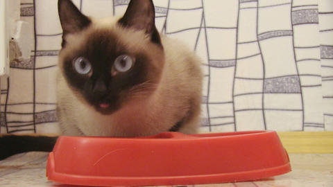 cat eating Stock Video Footage