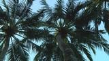 Palmtrees Footage